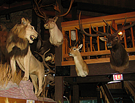 Safari Club Lounge in Thermopolis, Wyoming